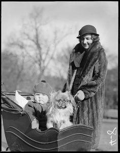 Dog in the Public Garden with the kiddies   por Boston Public Library