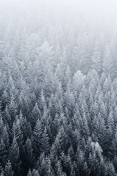 snow covered forest filled with with the chilled loneliness that winter brings. Winter Looks, Winter Snow, Winter Christmas, Winter White, Hello Winter, Deep Winter, Christmas Tree, In Natura, Winter Beauty