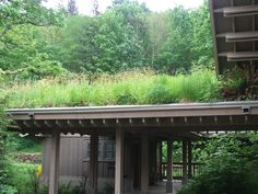 Green roof in the south