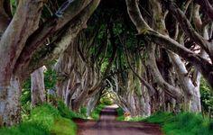 Dark Hedges, Irlandia Północna - 6 najbardziej niesamowitych szlaków świata - Galeria - Strona 6 - Turystyka - WP.PL
