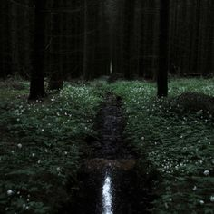 This is how the forest looks in the night. Dark Green Aesthetic, Nature Aesthetic, Witch Aesthetic, The Ancient Magus Bride, Slytherin Aesthetic, All Nature, Dark Forest, Character Aesthetic, Draco Malfoy