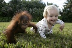 Baby orangutans are frequently cuter than baby humans.