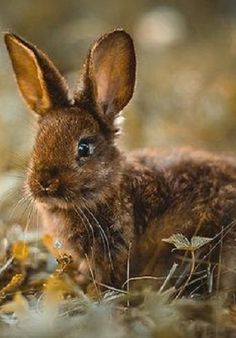Adorable fall bunny.