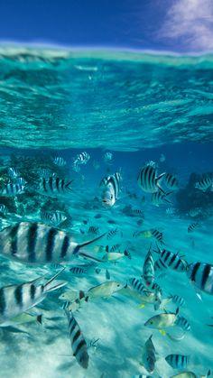 Water Photography Ocean Underwater Under The Sea 27 Ideas Underwater Photography, Nature Photography, Photography Backgrounds, Ocean Underwater, Beautiful Sea Creatures, Ocean Wallpaper, Ocean Creatures, Beautiful Ocean, Sea And Ocean