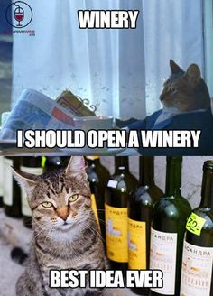 I need #wine money but I've probably captured my neighbor's cat & returned it for the reward 1 too many times.