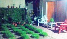 Garden. Grass puffs.