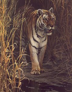 Tiger tiger burning bright. In the forest of the night. What immortal hand or eye could frame thy fearful symmetry?