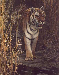 Robert Bateman is my favourite artist. His work is so amazing, it's unbelievable.