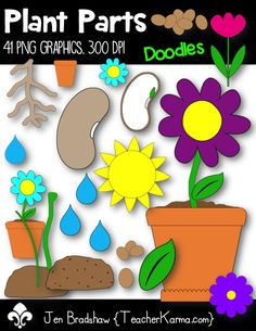 Plant Parts Clip Art!  These plant part graphics are great for your science teacher materials and classroom decor this Spring and Summer.  Commercial and personal use is ok.  TeacherKarma.com