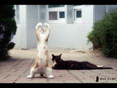 Compilacion de los mejores videos de gatos graciosos - YouTube