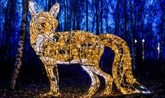 Zoo Lights: the phenomenon that turns zoos – and other wildlife spaces! – into visitor attractions at night Wildlife Tourism, Zoo Lights, Light Trails, Zoos, Time Art, After Dark, Natural World, Attraction, Festive
