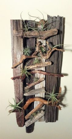 Wood & Air Plant Wall Art Using drift wood and air plants to create a unique piece of art.Using drift wood and air plants to create a unique piece of art. Succulent Wall Art, Plant Wall, Plant Decor, Succulent Planters, Driftwood Projects, Driftwood Art, Air Plant Display, Air Plant Terrarium, Deco Floral