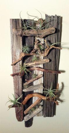 Danielle Pace DYI Drift Wood and Air Plant Wall Art
