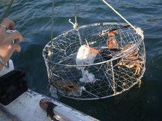 Crab fishing || Image Source: http://www.themaninchina.com/images/august2010/gibsonslandingcrabs.jpg