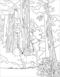 Printable coloring page for the kids of a Yosemite camping