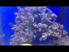 Aquael nano 30 aquarium with tiny fish!
