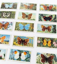 British Butterflies - Brooke Bond tea cards Pg Tips, Life Is What Happens, Bees, Growing Up, Butterflies, Nostalgia, Wildlife, Gallery Wall, Childhood