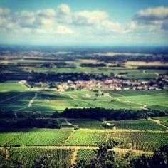 the Montrachet vineyard in Burgundy