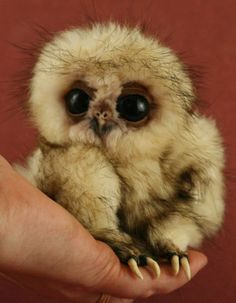 Baby Owls | Baby Owl Pictures: Photos of Cute Animals, Young Owls | Teen.com