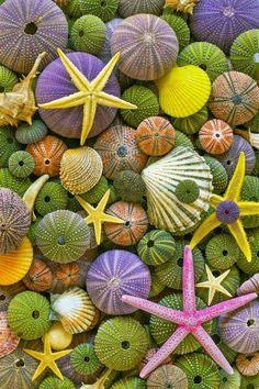 #fruits #sea #seafruits
