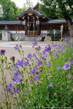 Foto Munenobu_furutani Kyoto-Jinja  Santuario, Kyoto