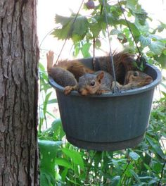 When sowing a basket of squirrel seeds, be sure to leave ample room for growth ... ;-)
