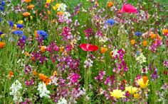 My front garden will be just wild flowers and picnic hampers
