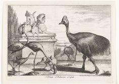 Gérard Scotin (I) | Kasuarissen, purperkoet en flamingo's, Gérard Scotin (I), Lodewijk XIV (koning van Frankrijk), 1670 - 1674 | Exotische vogels in de tuinen van Versailles. Voor een beeld van een sfinx lopen kasuarissen, purperkoeten en flamingo's.