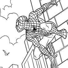 Spiderman scales walls coloring page. If you like challenging coloring pages, try this Spiderman scales walls coloring page. We have lots of nice . Cartoon Coloring Pages, Coloring Pages To Print, Coloring Book Pages, Printable Coloring Pages, Coloring Sheets, Coloring Pages For Kids, Kids Coloring, Spiderman Drawing, Spiderman Coloring