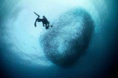 Sipadan barracuda point Diving, Waves, Island, Outdoor, Outdoors, Scuba Diving, Islands, Ocean Waves, Outdoor Games