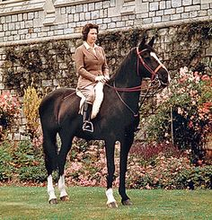 In the Fifties, a lively black mare called Betsy became a favourite of the    Queen. Betsy grew up on a farm but was a sensitive type who loathed being    clipped by her groom.