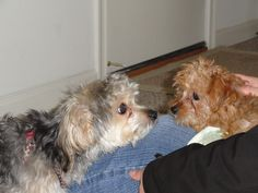 rusty and gracie
