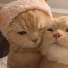 Cute Baby Cats, Cute Little Animals, Cute Cats And Kittens, Cute Funny Animals, I Love Cats, Crazy Cats, Cool Cats, Kittens Cutest, Cat Aesthetic