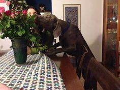 Argo smells roses