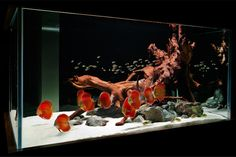 27 Cool Aquariums for Your Home | product design decorations  | product design decorations