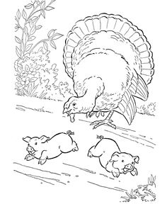 Farm Animal Coloring Page, free printable Barnyard Turkey coloring pages featuring hundreds of farm animals coloring page sheets. Camping Coloring Pages, Tractor Coloring Pages, Turkey Coloring Pages, Farm Animal Coloring Pages, Coloring Book Pages, Barn Animals, Barnyard Animals, Thanksgiving Coloring Sheets, Elderly Crafts