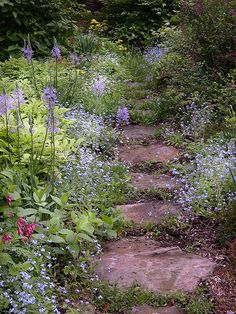 Lovely serene garden path in lavenders. Brunneria macrophilla is nice to line the shady path. Use stepping stones in our east front yard?