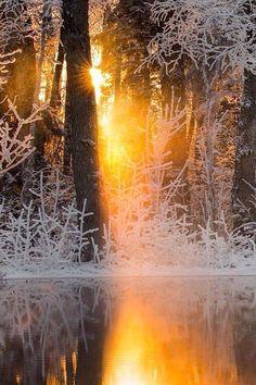 Frosty                                                                                                                                                                                 Mehr
