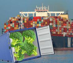 Es ist der Fund des Jahrzehnts und er liest sich wie eine Netflix-Serie über ein lateinamerikanisches Drogenkartell: Fünf Container mit insgesamt 16 Tonnen Tiefkühl-Brokkoli wurden in der Donaumarina in Wien beschlagnahmt. Es handelt sich dabei nicht um den ersten Fund, aber um den umfangreichsten. Eine eigens trainierte Hundestaffel, die auf das Aufspüren von Gemüsepflanzen – […] The post Größter Fund Europas: Zoll beschlagnahmt 16 Tonnen Brokkoli aus Ecuador appeared first on Schwanzschn Tonne, Post, Ecuador, Europe, Satire News, Drug Cartel, Netflix Series
