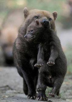 .Mama Bear carrying Boo Boo
