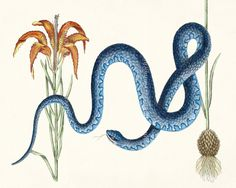 Year of the Snake - Curious Reptiles Art Print - Blue Snake Natural History Wall Decor Illustration 10x8. 15.00, via Etsy. read my post on decorating with snake: http://accessdesigngroup.blogspot.com/2013/02/dances-with-snakes.html