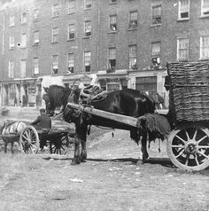 15 Never Seen Before Photographs of Limerick from the Limerick City, Horse Story, Story Video, Old Pictures, Ireland, Horses, History, Georgian, Life