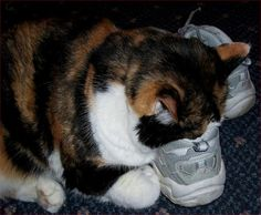 15 Cats In Shoes