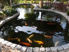 The owner of this koi pond must be very proud. Backyard Water Feature, Ponds Backyard, Koi Ponds, Garden Features, Water Features, Fish Pool, Garden Pond Design, Cool Fish Tanks, Portland Japanese Garden