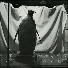 """Window Display"", 1955, B & W print  Kiyoji Otsuji"