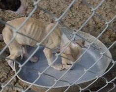 Inflict Harshest Punishment For Dog Fighting & Cruelty of More Than 50 Dogs in TN