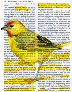 Birds in Books by Pennsylvania artist and designer Paula Swisher Altered Books, Altered Art, Book Design Graphique, Book Page Art, Colossal Art, Dictionary Art, Mellow Yellow, Yellow Black, Color Yellow