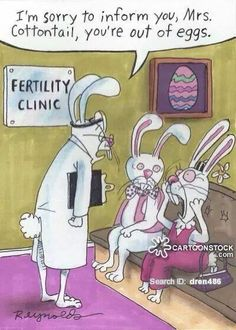 696 Best Funny Rabbit Pictures And Cartoons Images Rabbits Bunny
