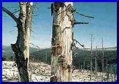 PURIFICACION DE AIRE AIRIFE te dice  ¿qué problemas trae la deposición acida? Cuando la acidez es alta mas metales se disolverán en el agua. Esto puede producir contaminación de las aguas superficiales, lo que tiene serios efectos sobre la salud de las plantas y animales acuáticos. Por ejemplo, altas concentraciones de aluminio (Al) pueden complicar la toma de nutrientes por parte de las plantas. Esto hace del aluminio una de las causas previas a la descomposición de los bosques.