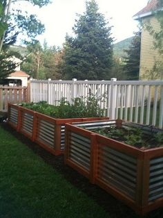 these raised garden beds with corrugated metal sides are gorgeous and industrial looking at the same time.